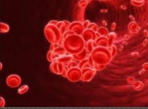 سيولة الدم