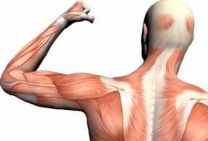 الام العضلات بعد التمرين