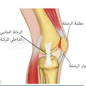 الرباط الجانبي الداخلي للركبة