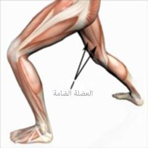 عضلة الفخذ الضامة